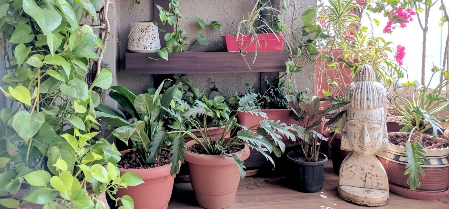 A Balcony Garden In Mumbai: Terrace Reveal • One Brick At A Time - balcony garden ideas mumbai