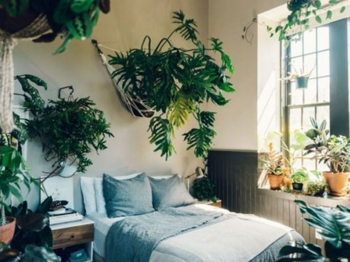 Bedroom Plants Ideas: 10+ Freshly Stylish Decors You'll Love