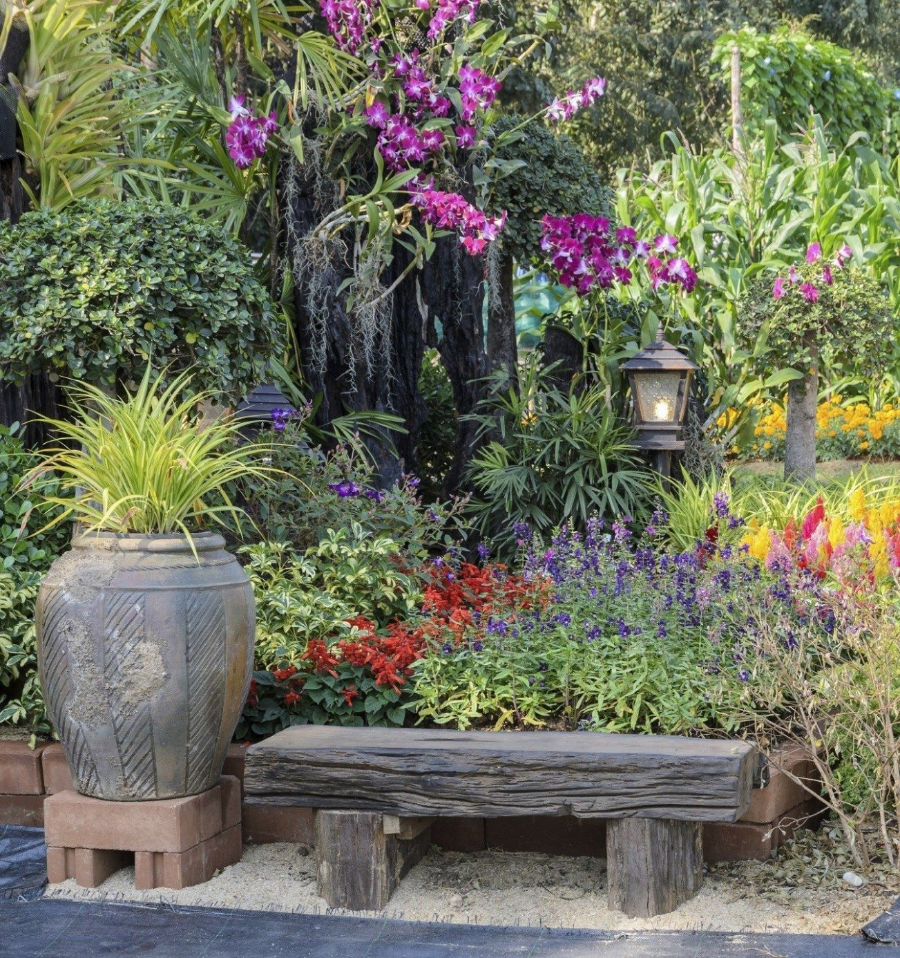 Choosing Colorful Garden Plants - Tips For Adding Color In The Garden - garden ideas plants
