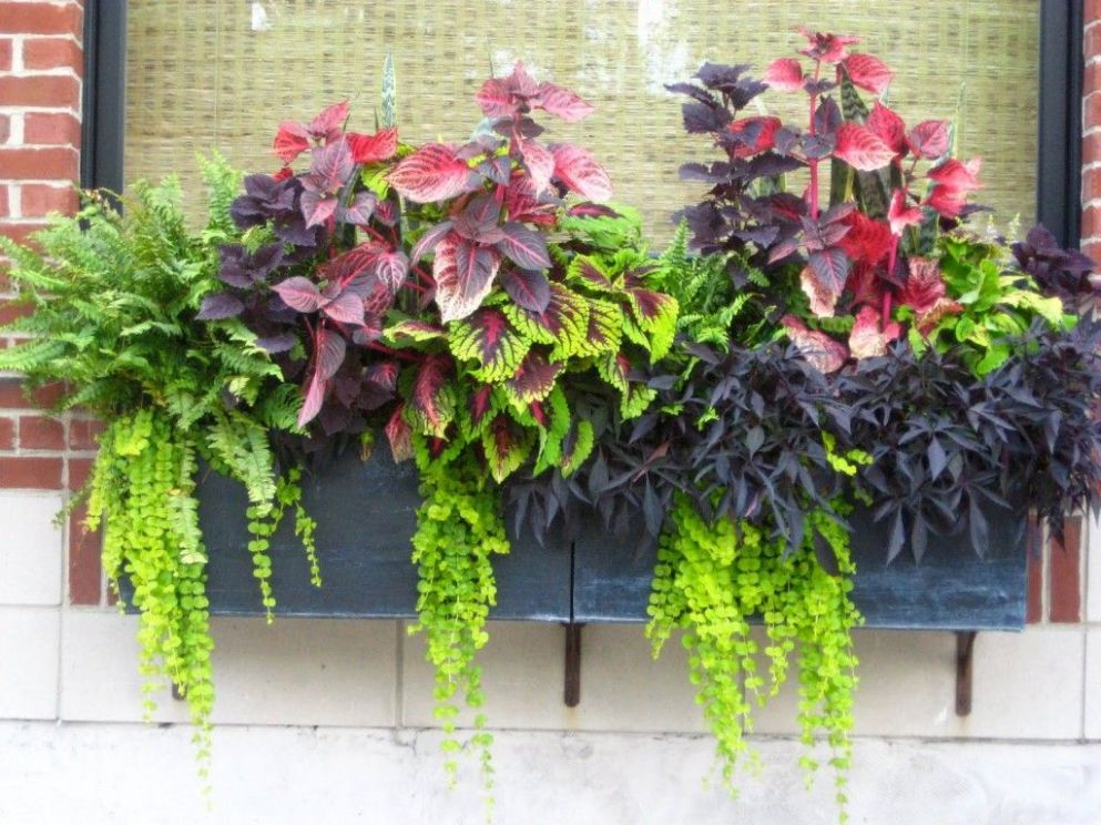 Container Gardening Ideas – Protecting Window Flower Boxes (With ..