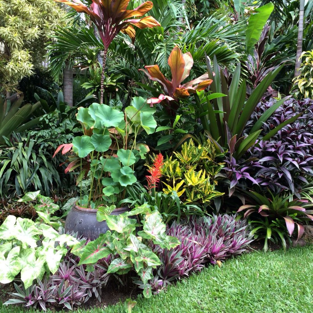 Contrasting form and colour gives every plant visual interest (con ..
