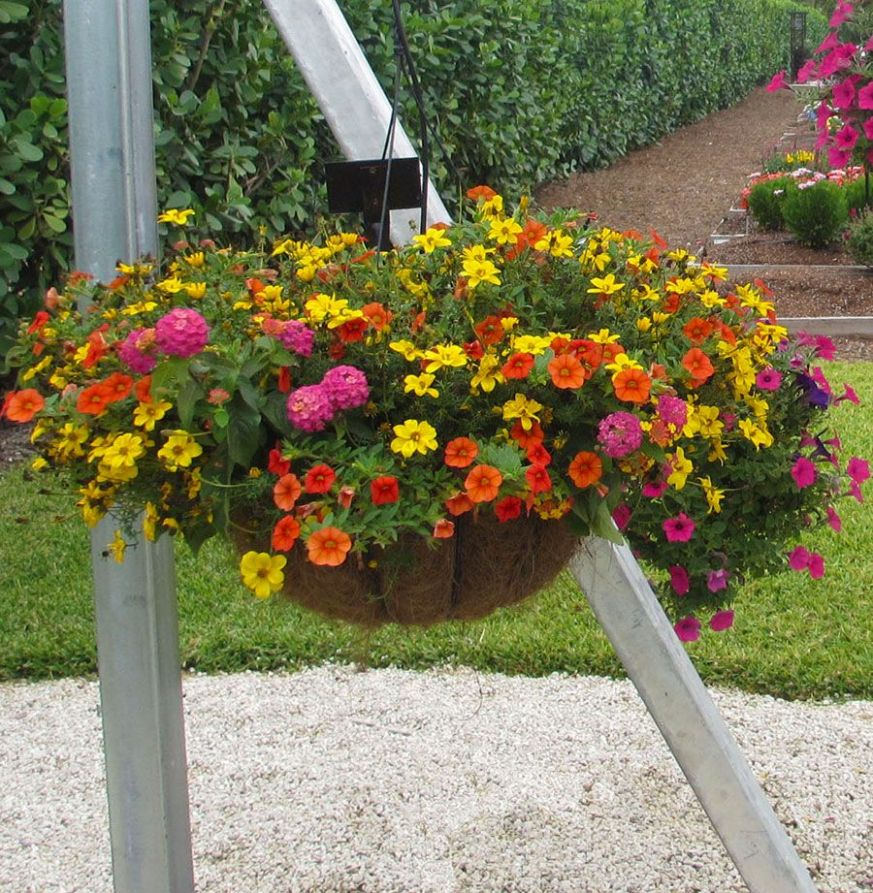 Costa Farms' Slideshow - Hanging Baskets Ideas | Hanging basket ...