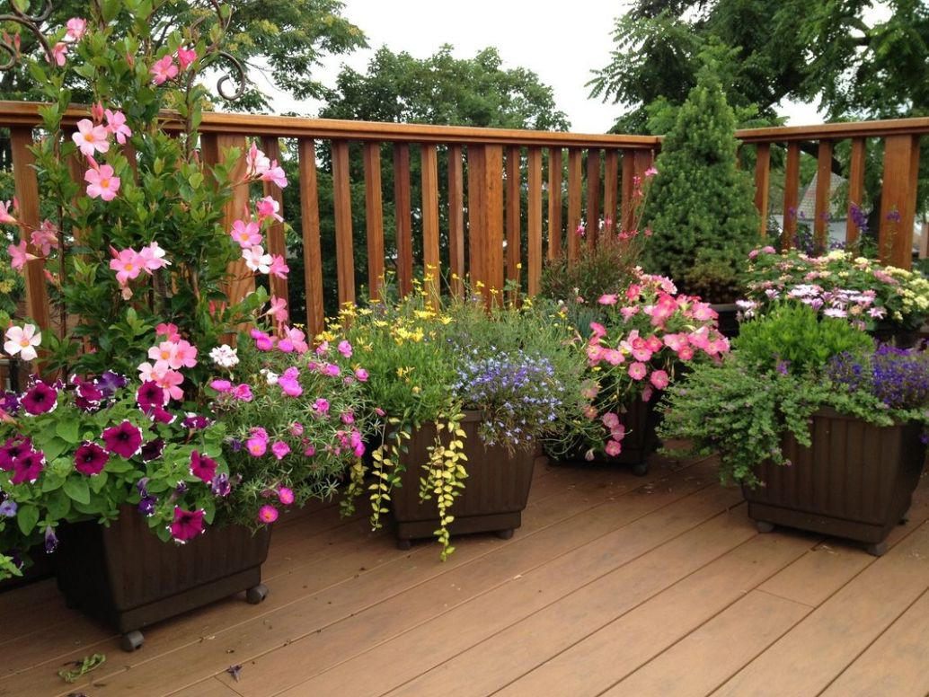 deck pots for sun - Google Search | Garden design, Garden plant ...
