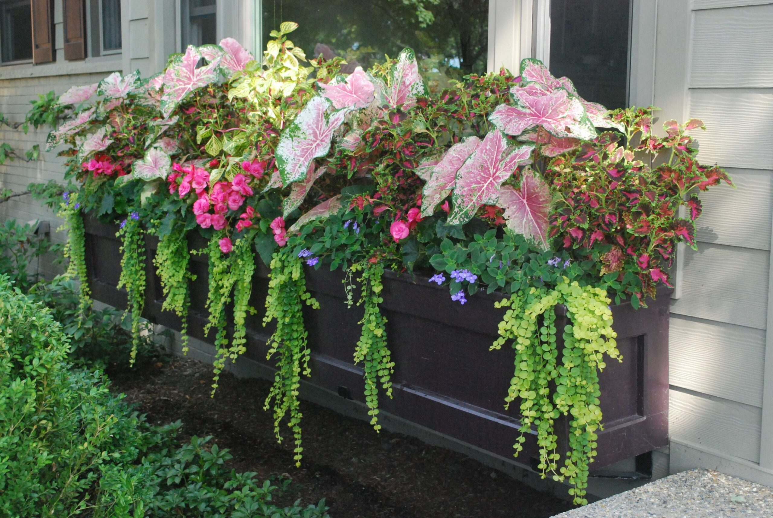Designing Summer Containers (With images) | Window box plants ..