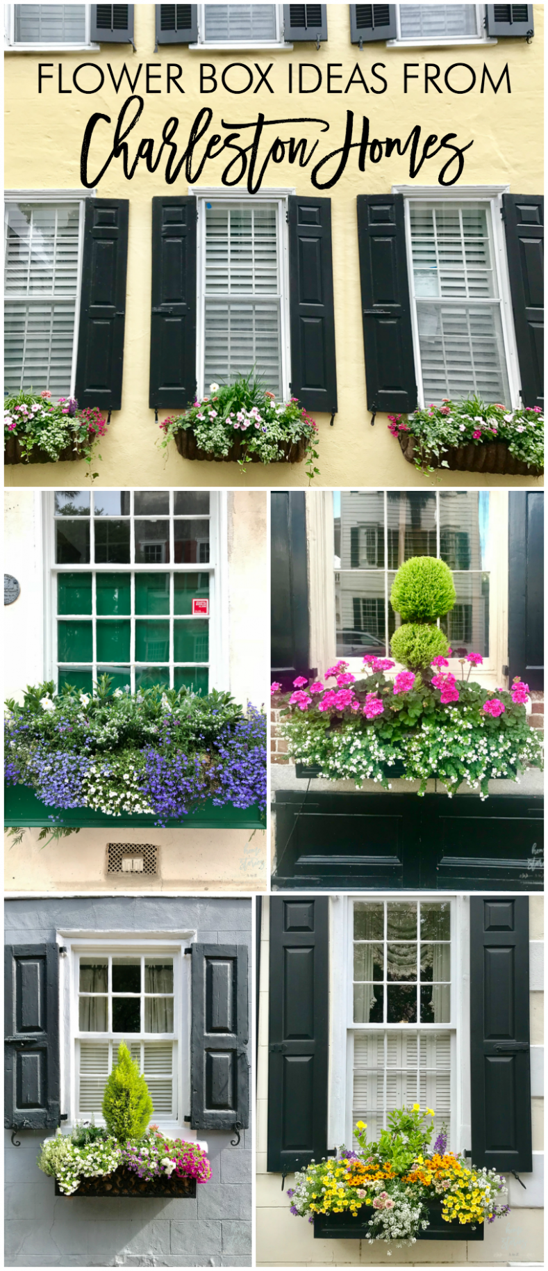 Flower Box Ideas: Window Flower Box Inspiration from Charleston Homes