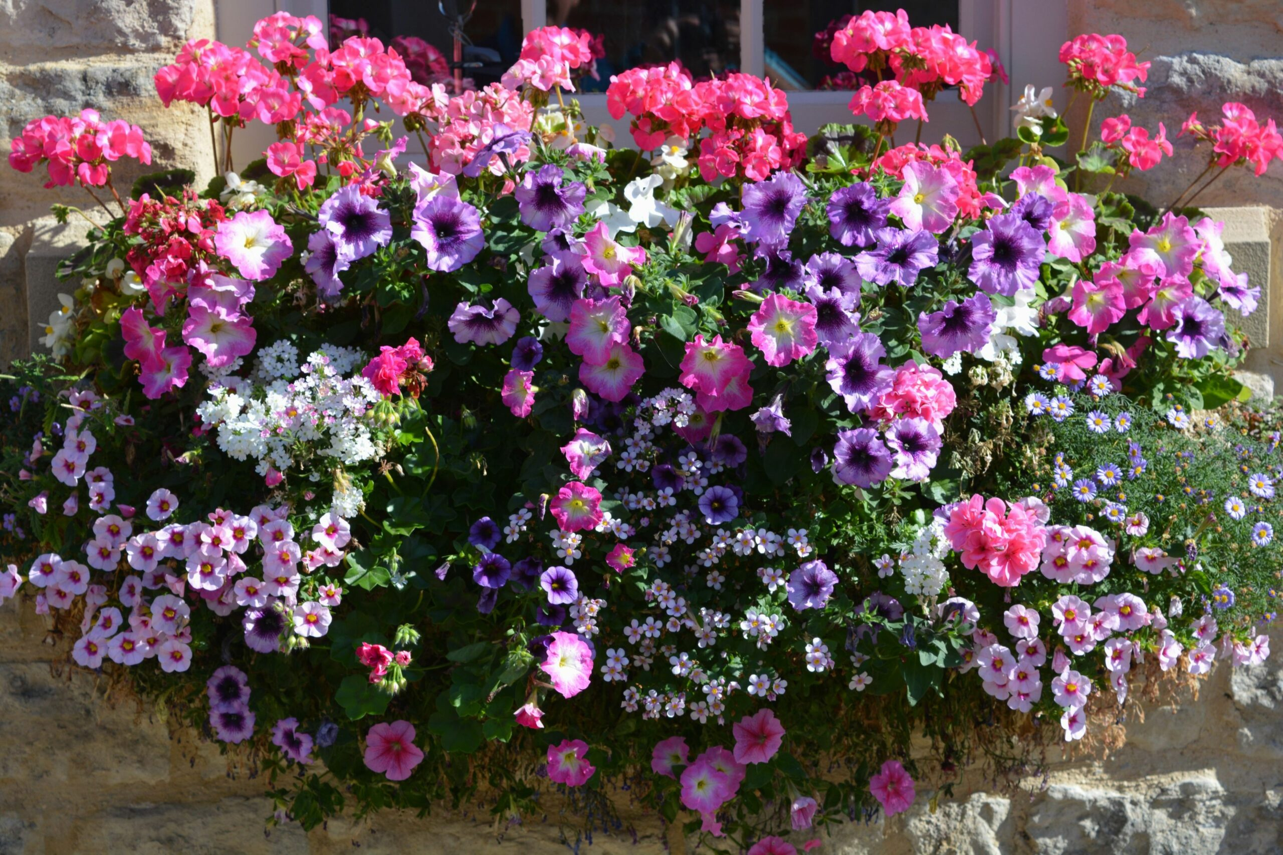 Flowering Window Box Ideas That Work for Sunny Gardens - window garden ideas india