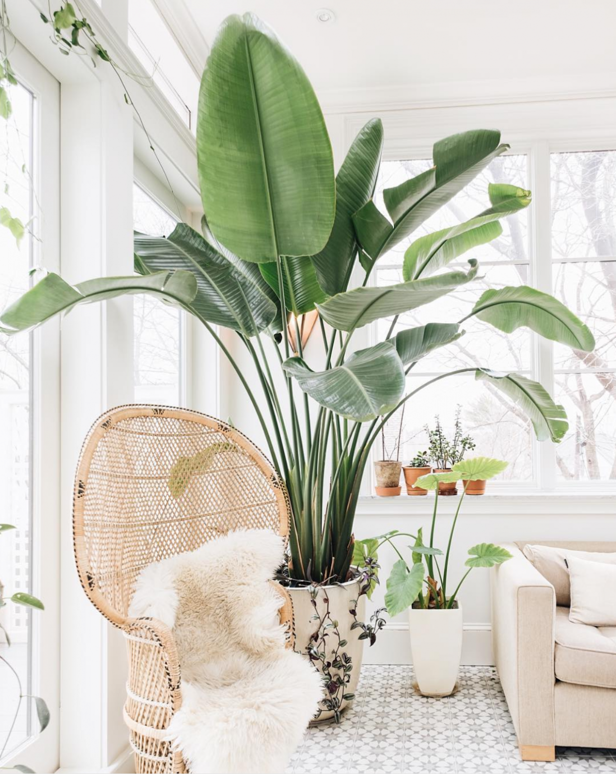 Get Inspired by Plant Home Decor | Oh to Be a Muse - home decor plants