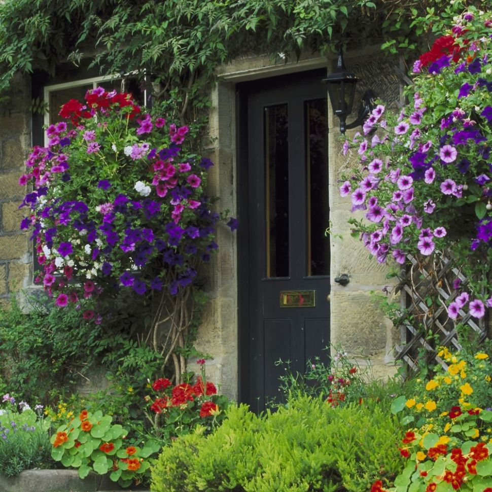 Hanging basket ideas: New planting ideas for fabulous baskets - garden ideas hanging baskets