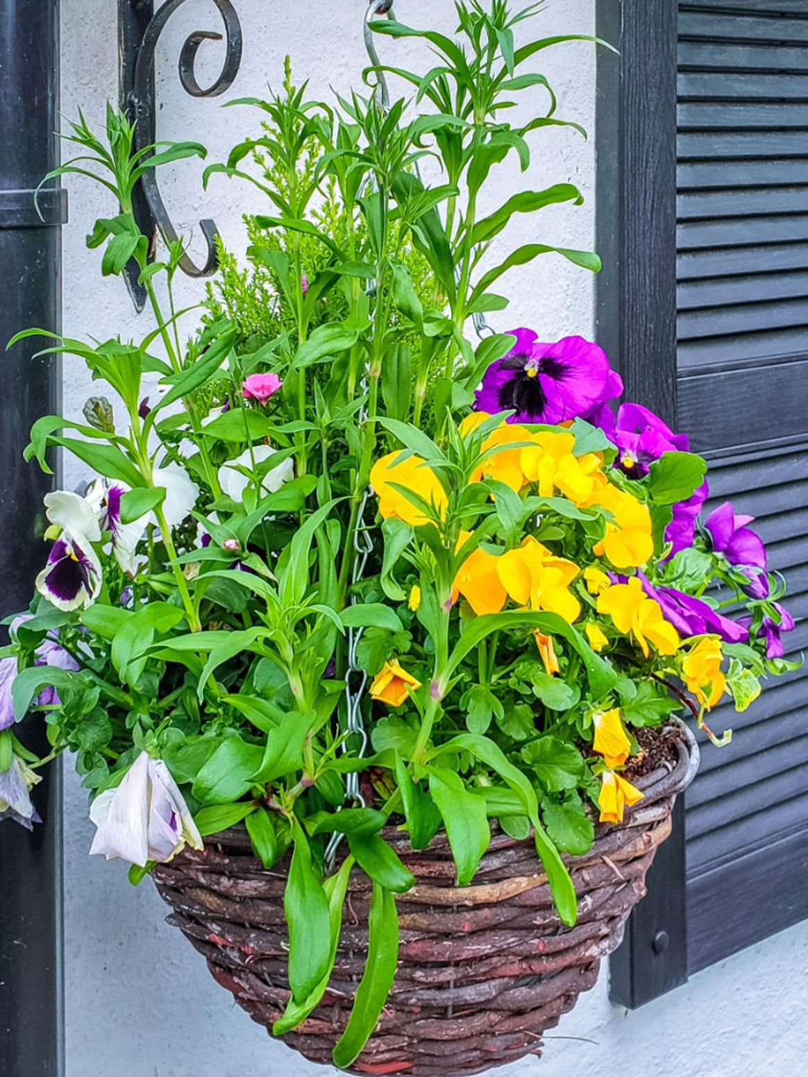 Hanging Basket Plants: Best Flowers For Hanging Baskets - garden ideas hanging baskets