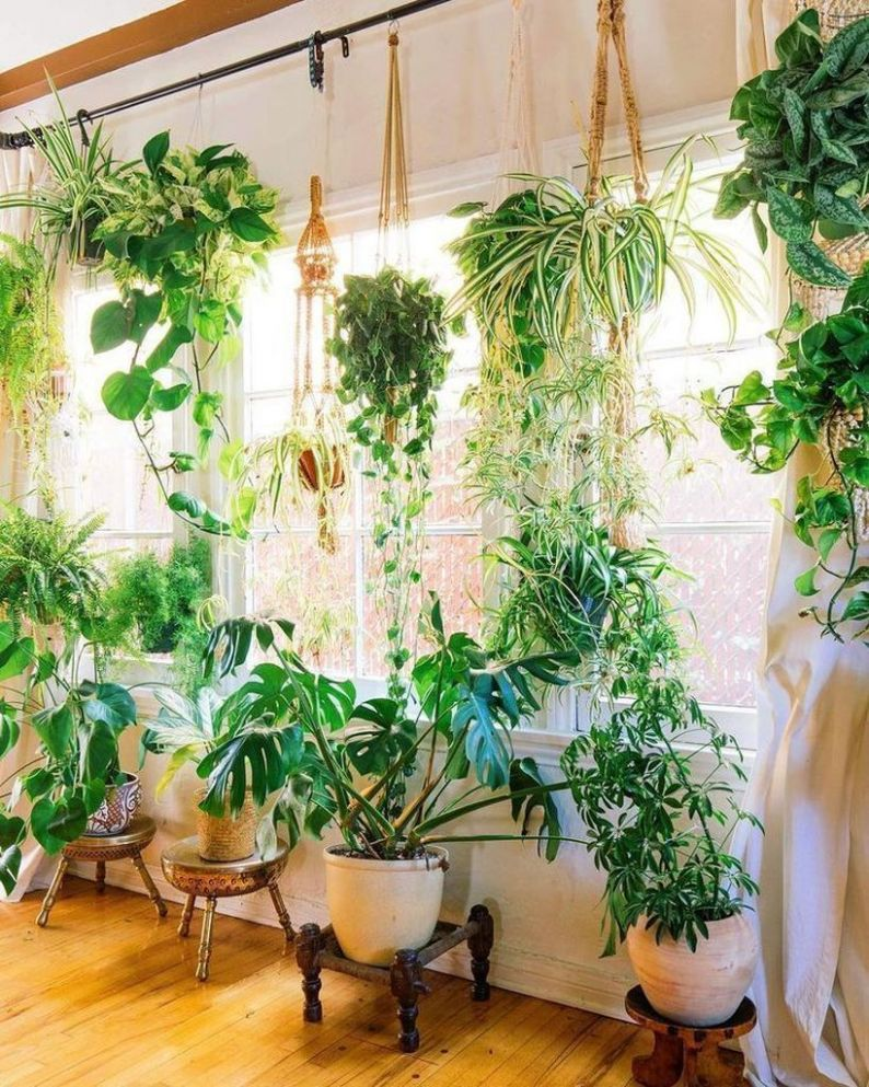 hanging plants interior ideas #decoration # hanging # plants ...