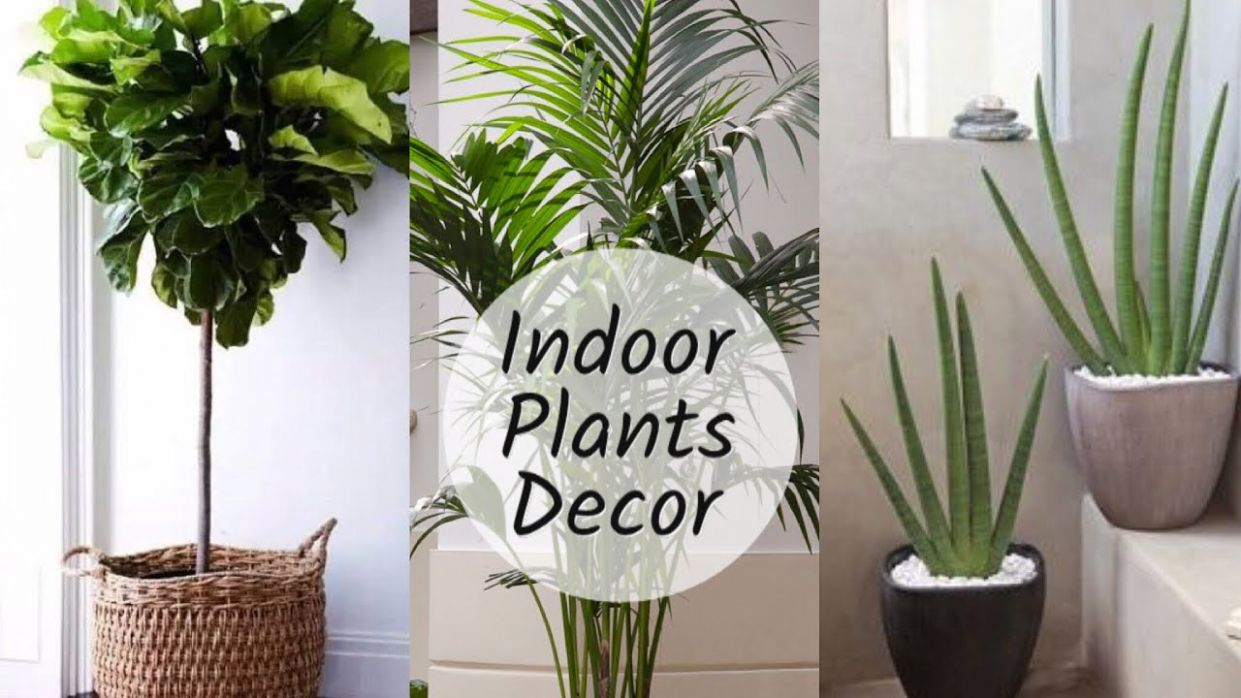 Home Decoration With Plants || Best Indoor Plants In India For Decoration - home decor plants
