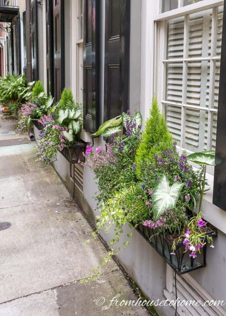 How To Design Window Box Flower Combinations (Inspired By ..