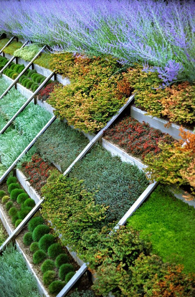 Huge Profits From Growing Your Own Microgarden   Sloped garden ..
