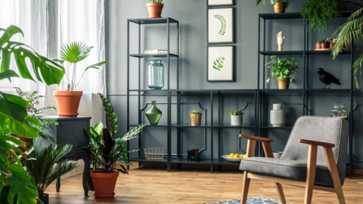 Ideas to Decorate Indoor Plants in your Living Room - RooHome - living room ideas with plants