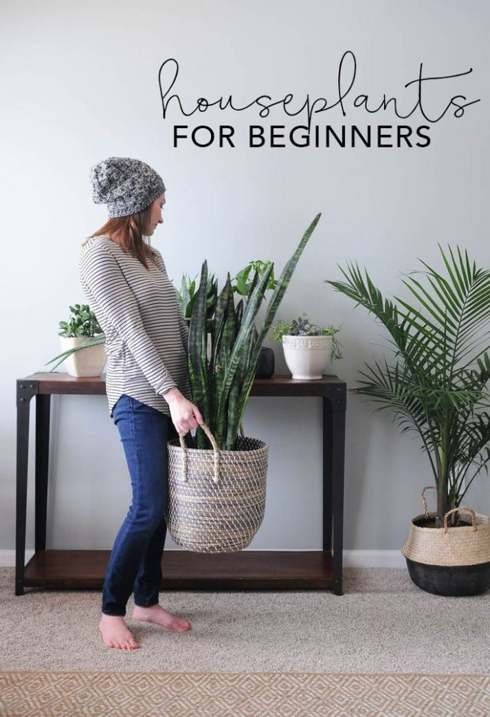 Indoor House Plants: How to Keep House Plants Alive | home | Home ..