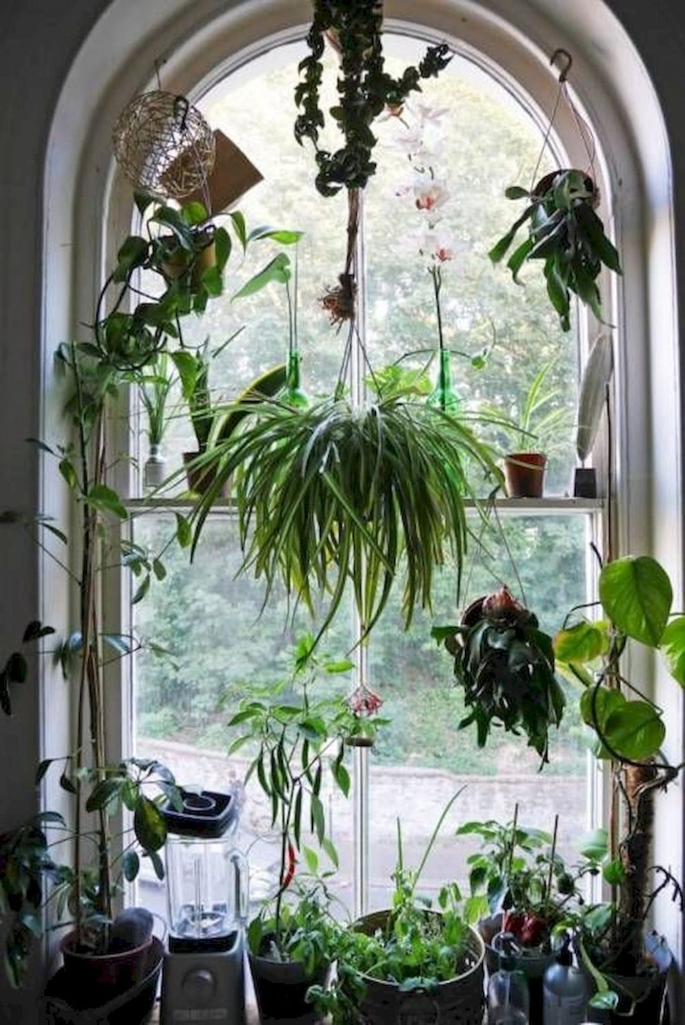Inspiration Types of Home Ornamental Plants That Can Cool the Eyes ..