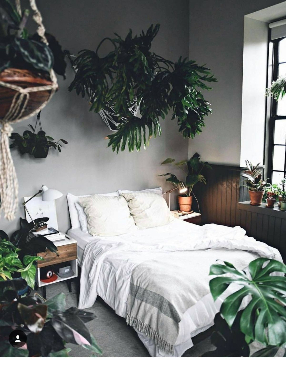 Lovely Bedroom Plant Ideas Plants In The Room Interior And ..