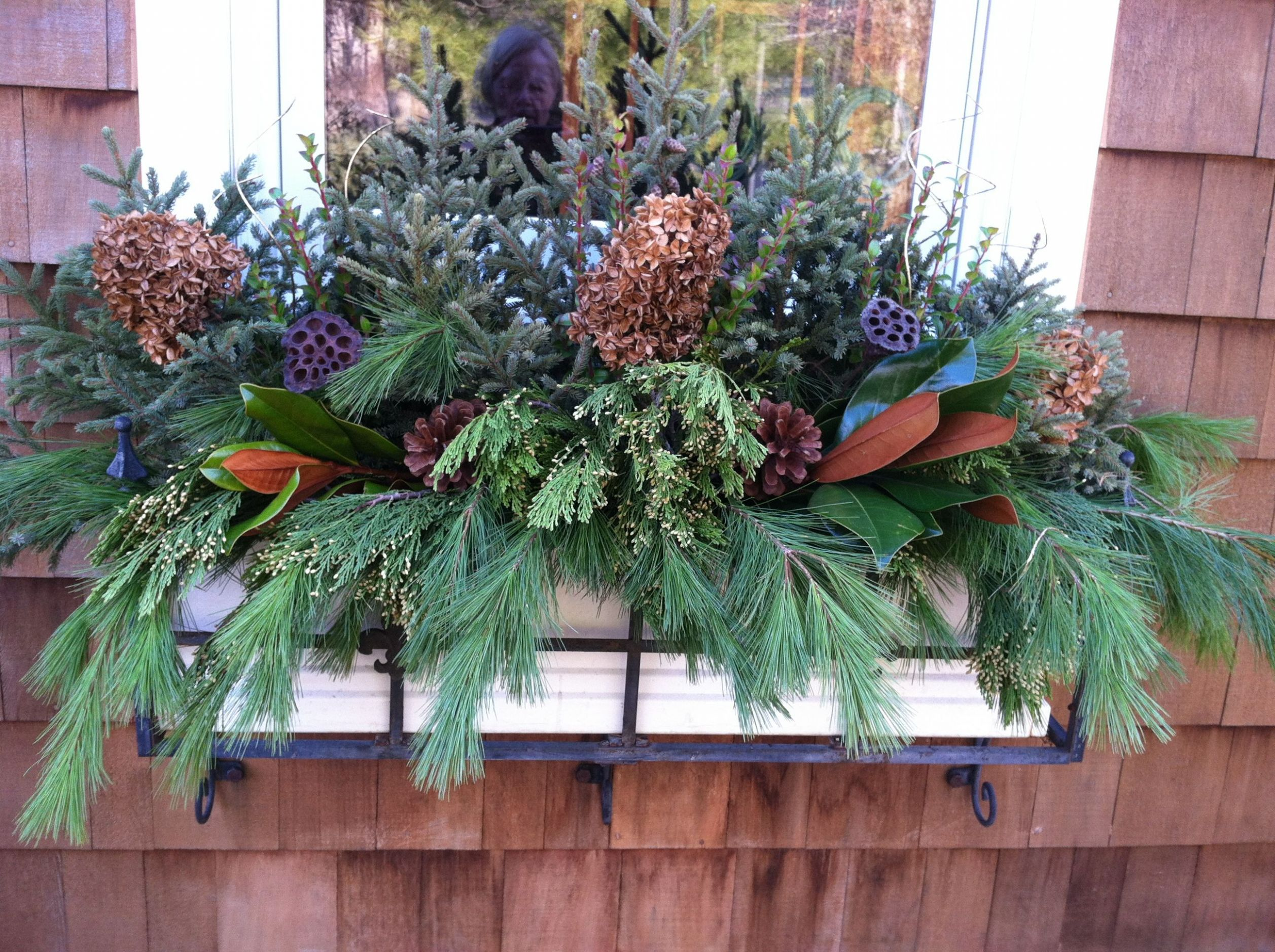 My mother's amazing winter flower box! Now you know where I get ...