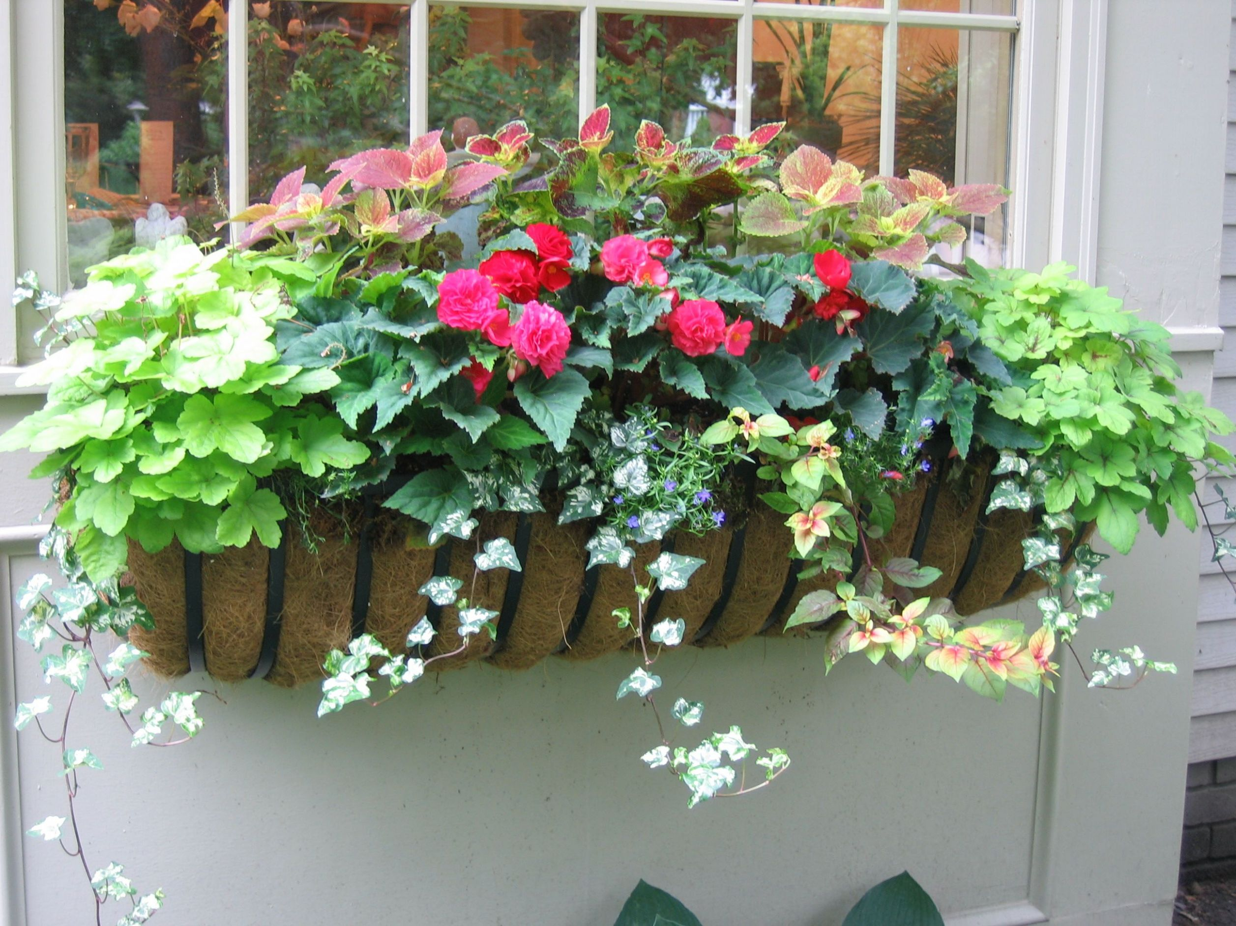 one of my summer window boxes | Window box flowers, Flower boxes ..
