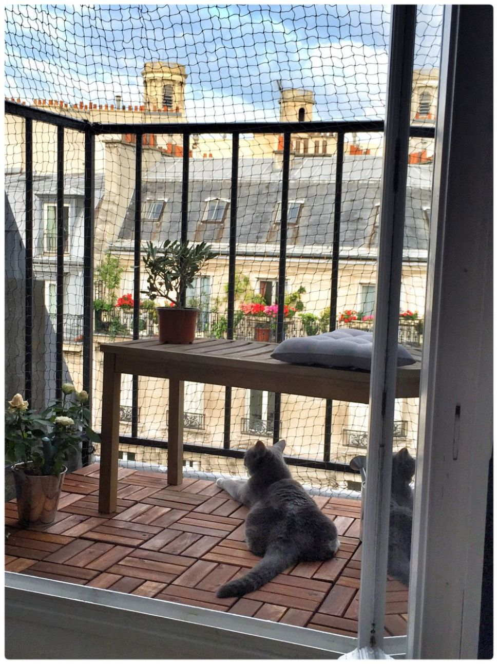 Paris balcony cattery (With images) | Cat patio, Cat apartment ...