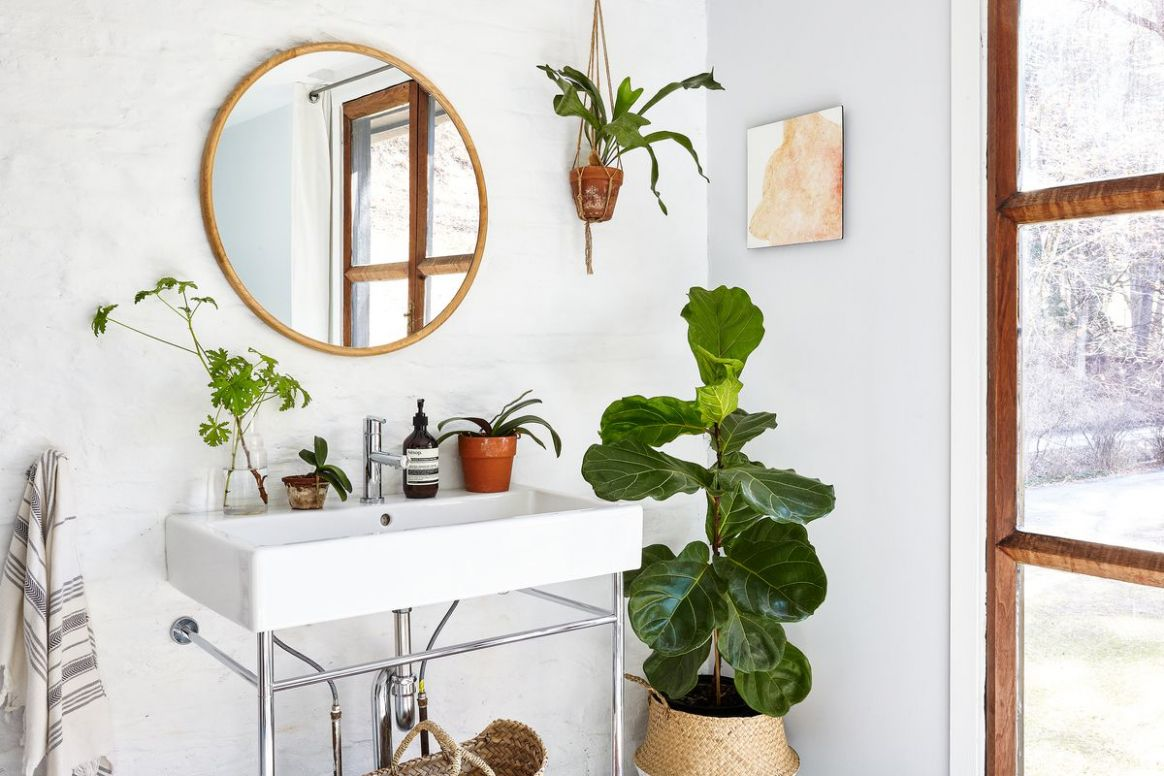 Plants: Ideas for decorating with greenery at home - Curbed - bathroom ideas plants