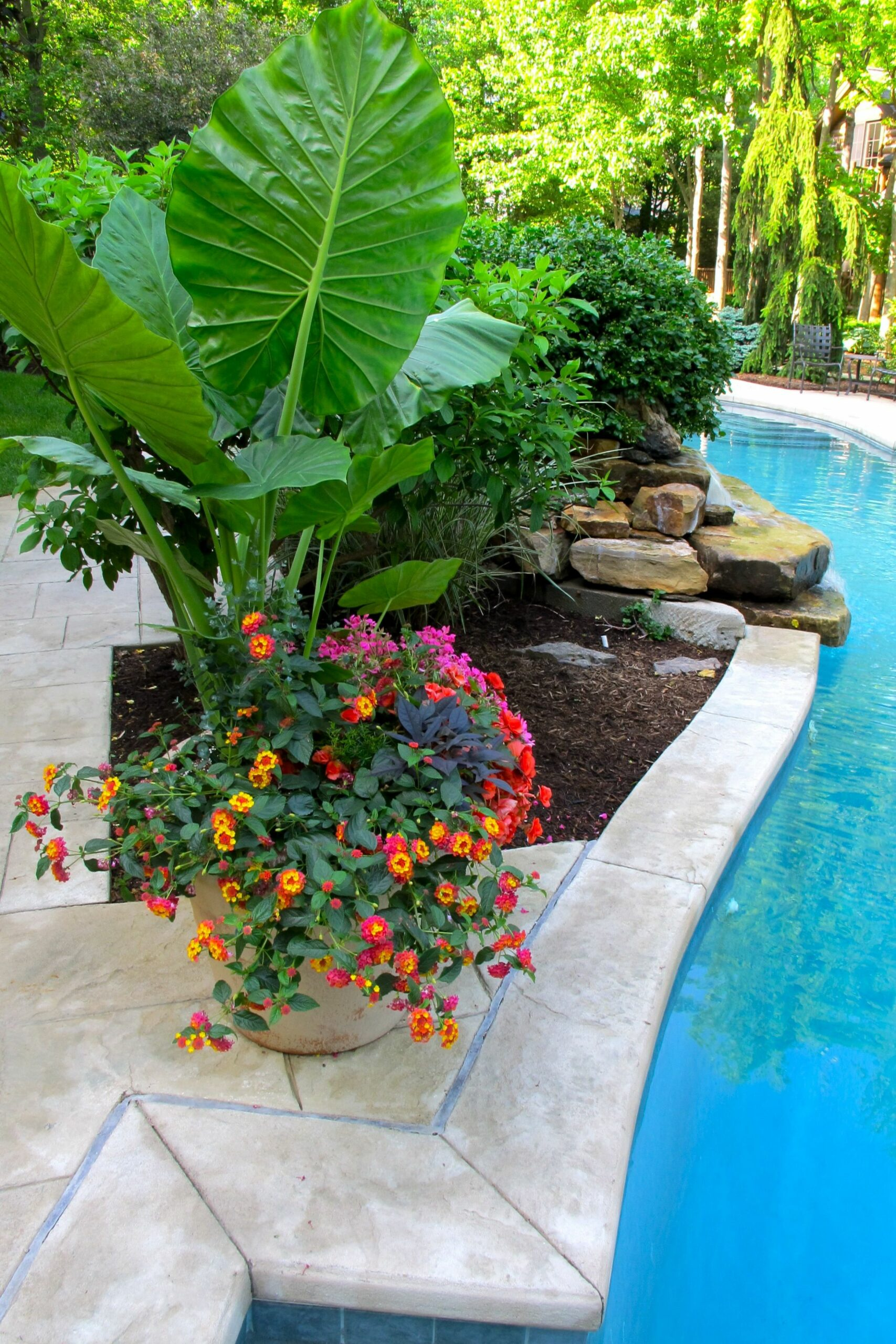 Pool pots around waterfall | Tropical backyard landscaping ...