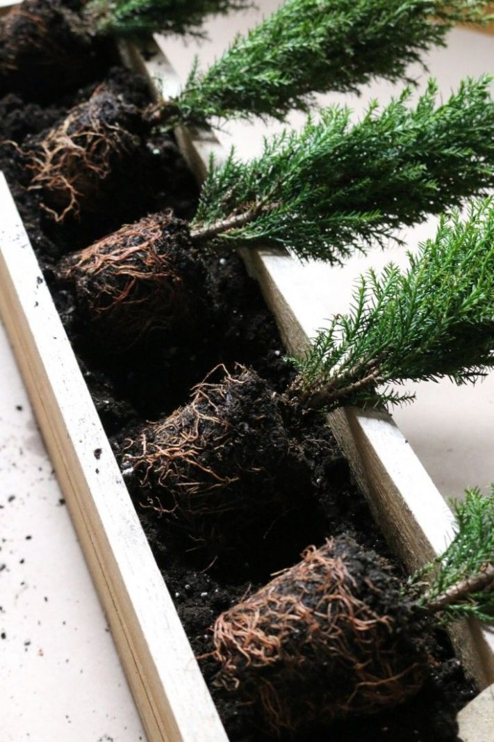 Small Space DIY: Tiny Trees for a Winter Window Box (With images ..