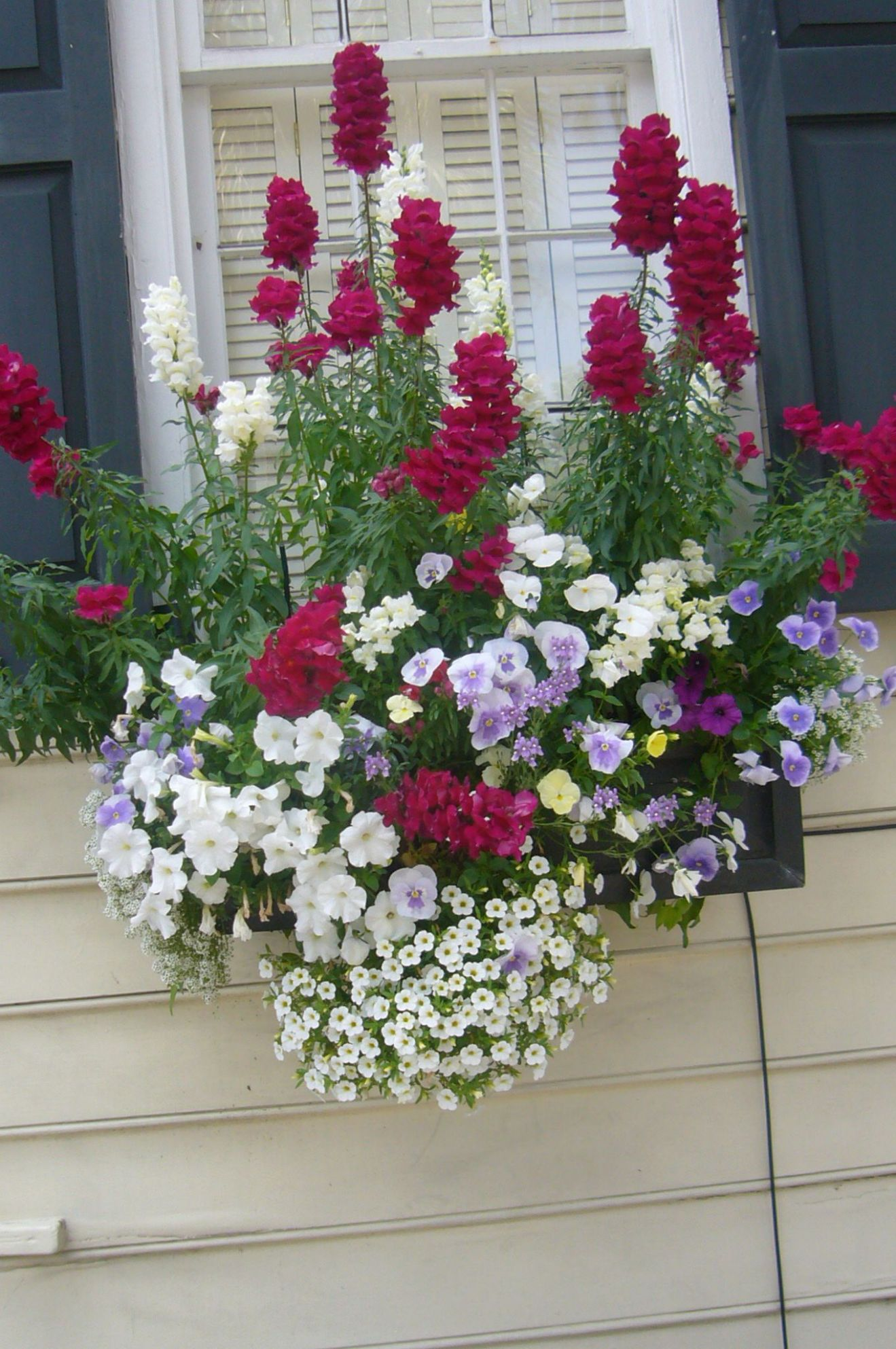 Summer Window Box Ideas (With images) | Window box flowers, Window ..