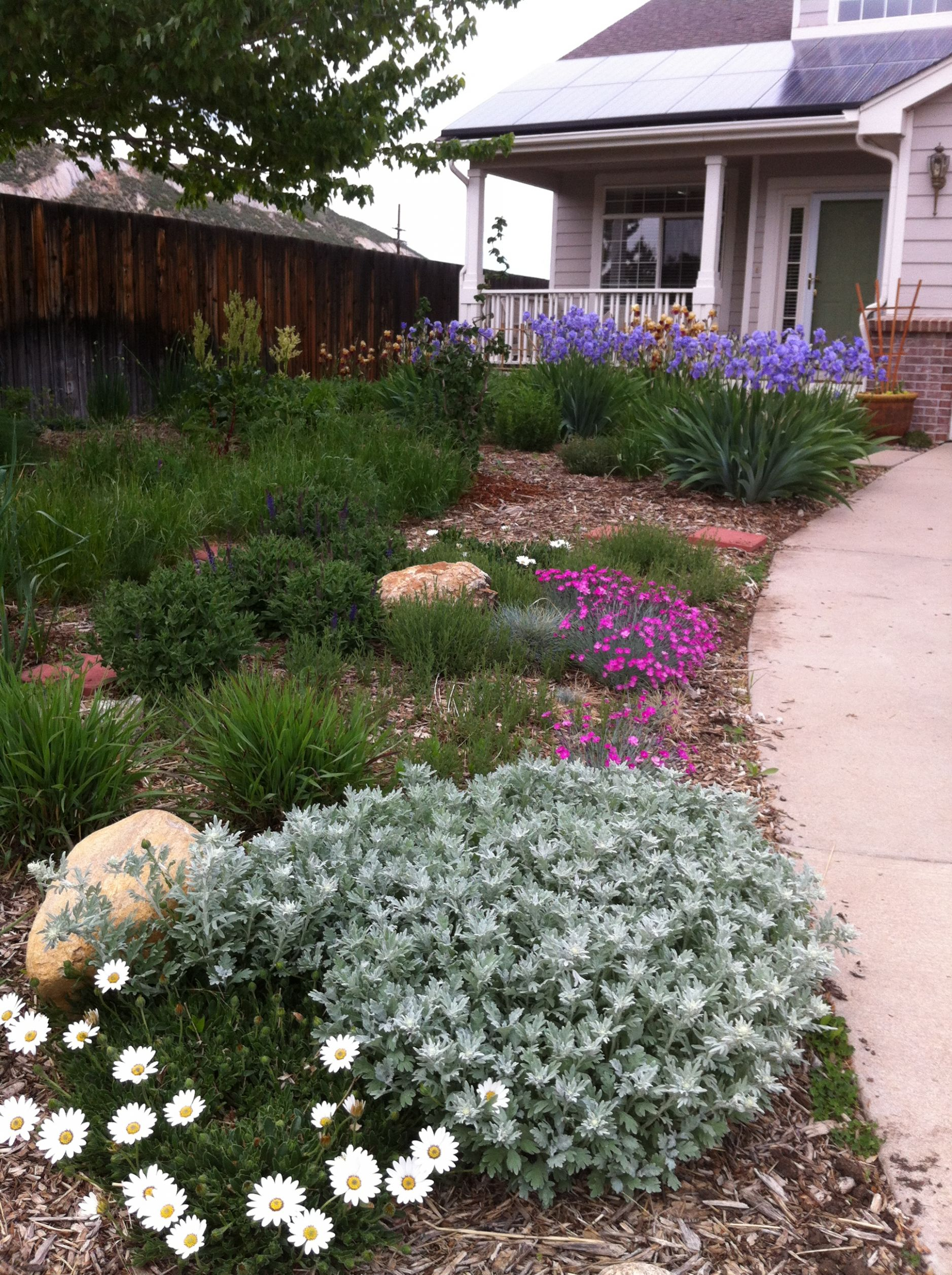 Tips and tricks for planning and designing your own xeric garden ..