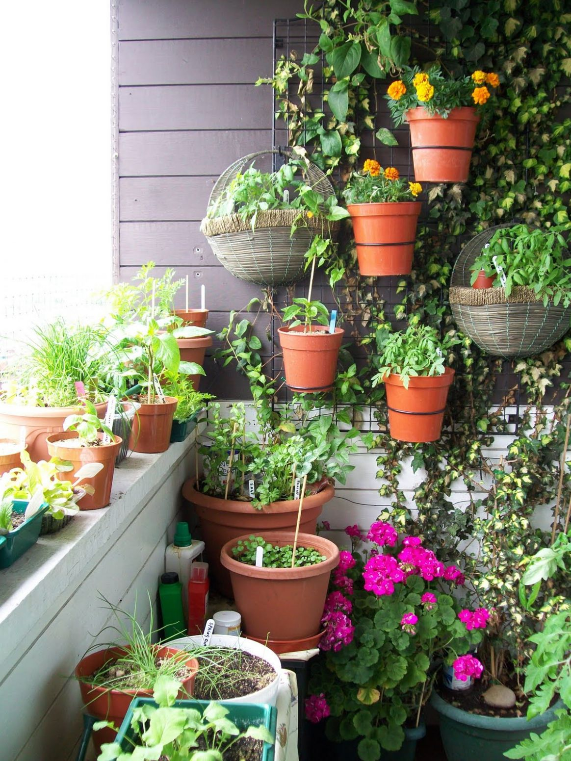 Urban Oasis: Balcony Gardens That Prove Green Is Always In Style - balcony ideas green wall
