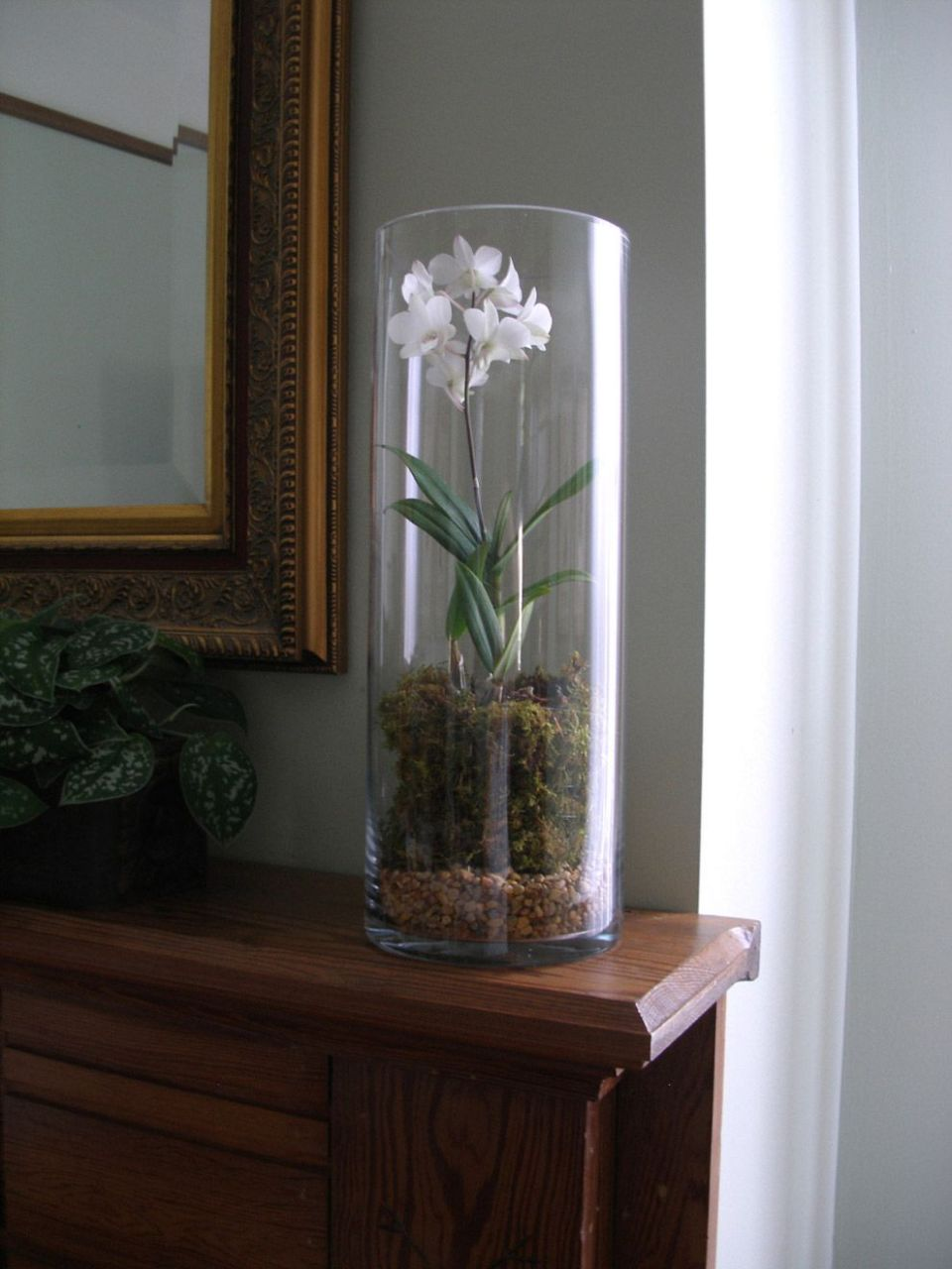 Using Round Cylinder Clear Glass Extra Tall Vase for orchid ..