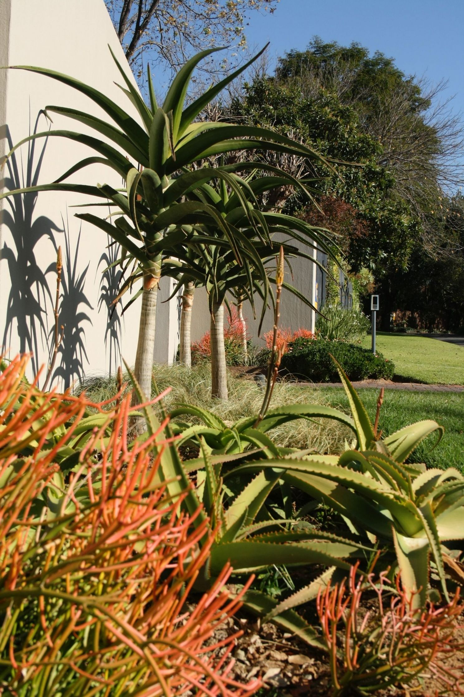 water wise indigenous South African garden | Waterwise garden ..