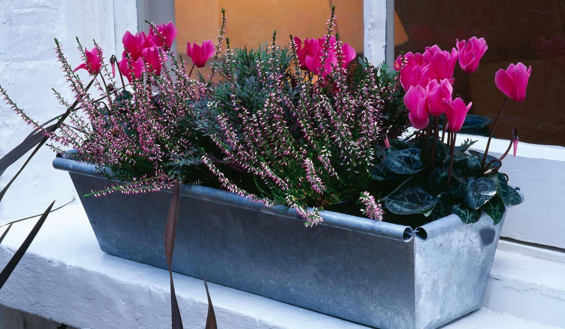 Winter is coming: how to prep your window boxes for cold weather ..